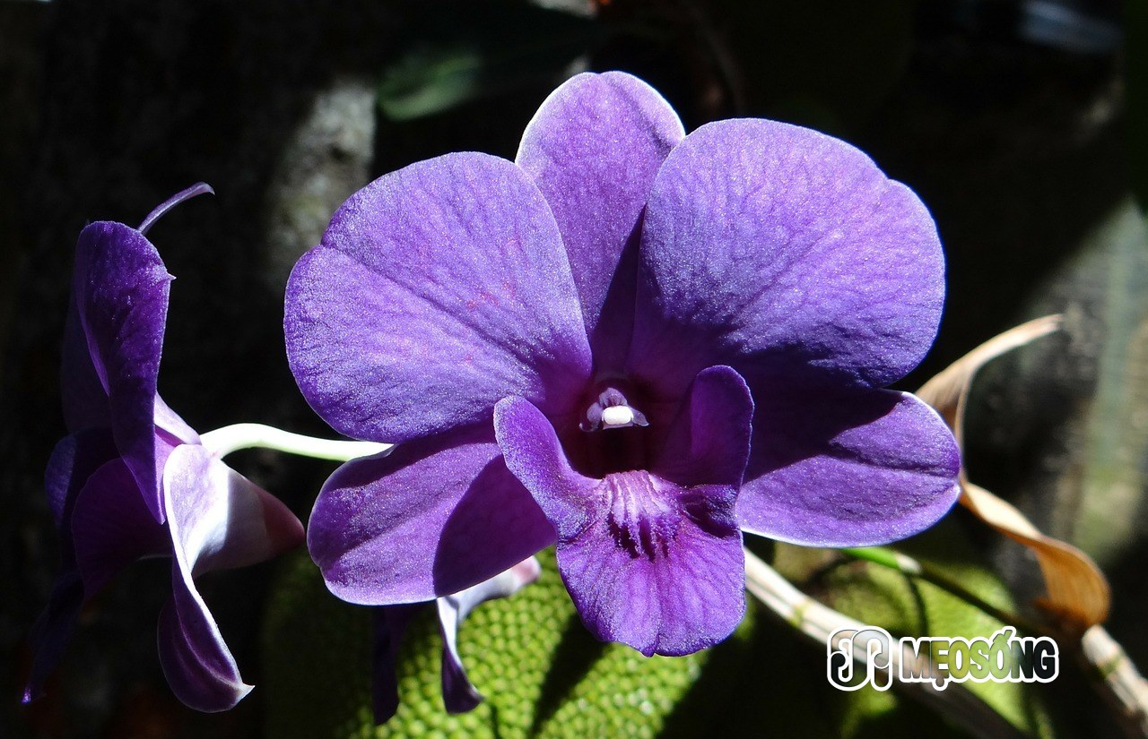 orchid-172206_1280
